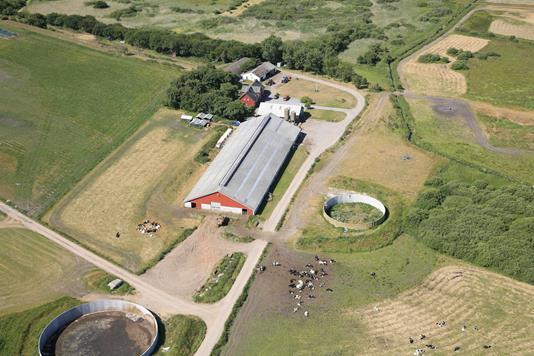 Kvæggård på Risgårdevej i Farsø - Ejendommen