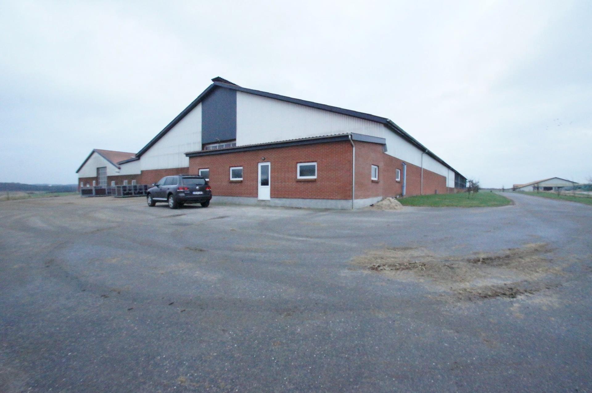 Kvæggård på Nørgaardsvej i Gedsted - Stald