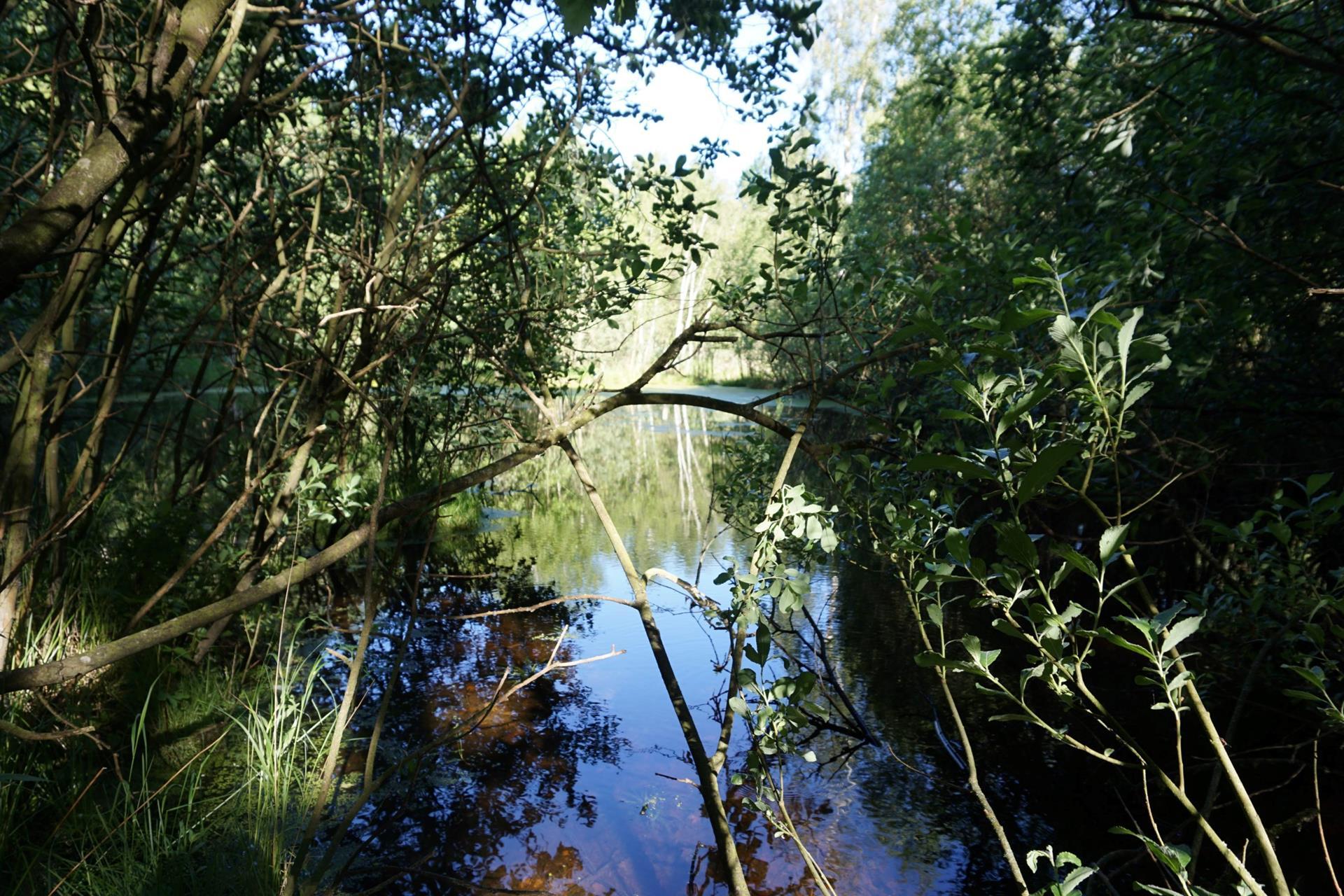 Planteavlsgård på Dorfvej i Dronninglund - Udsigt til sø
