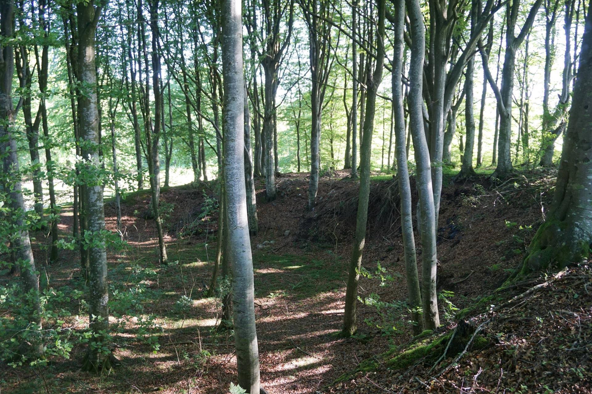 Planteavlsgård på Dorfvej i Dronninglund - Skov