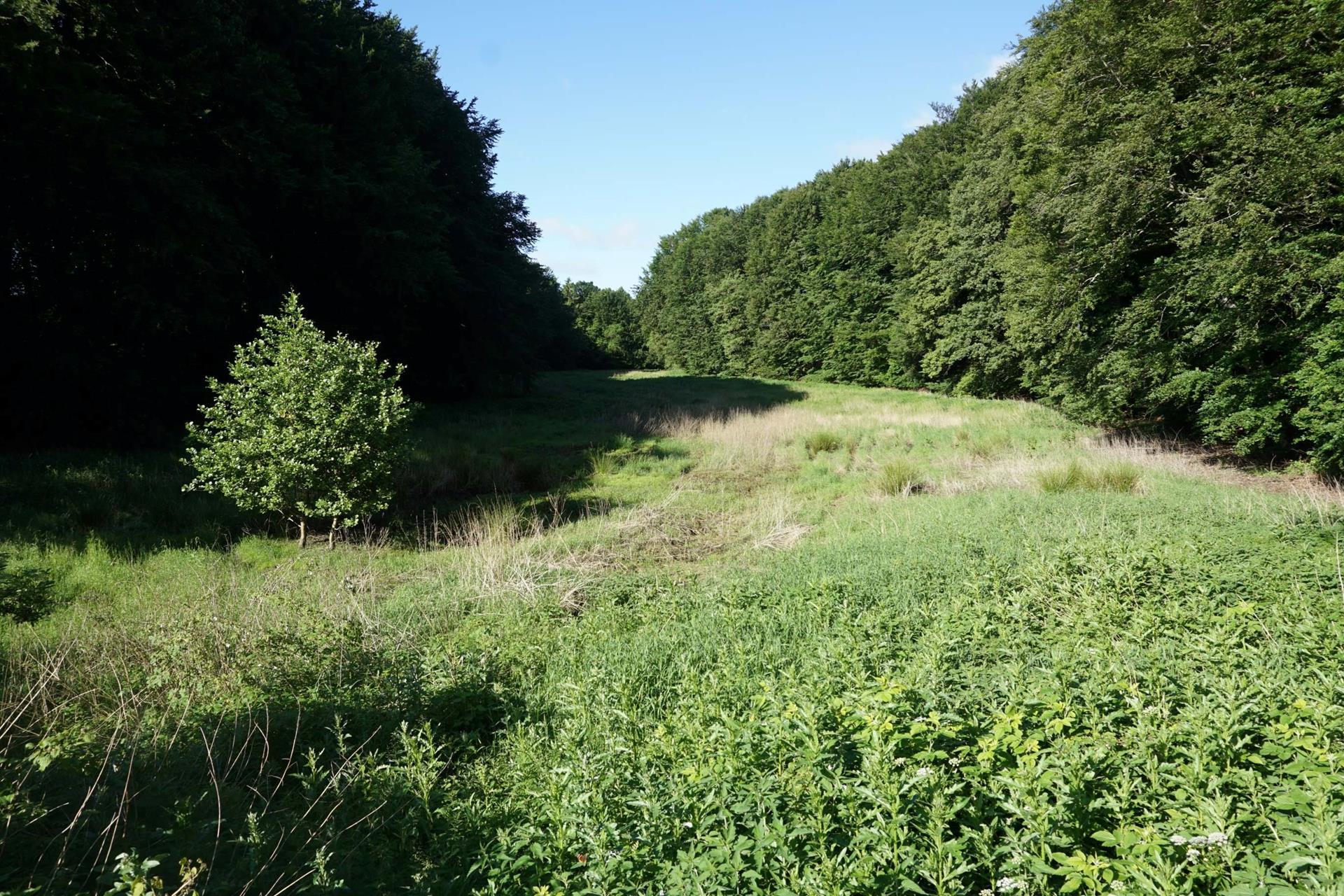 Planteavlsgård på Dorfvej i Dronninglund - Natur