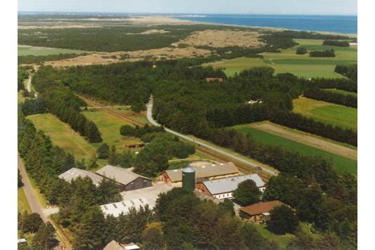 Planteavlsgård på Tornbakkevej i Skagen - Ejendommen
