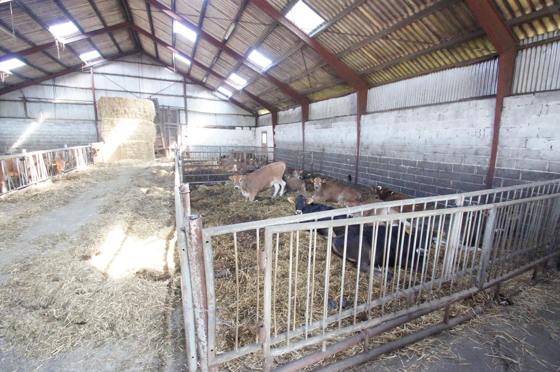 Kvæggård på Nejstvej i Sindal - Ungdyrstald