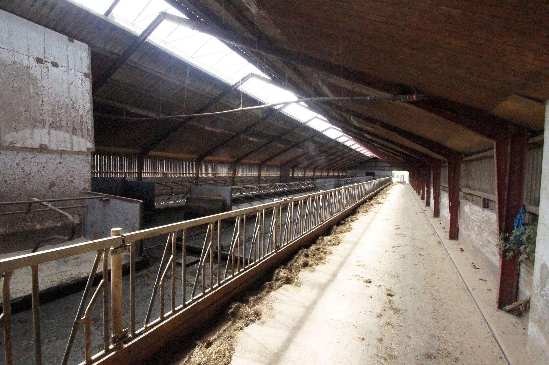 Kvæggård på Nejstvej i Sindal - Løsdriftsstald
