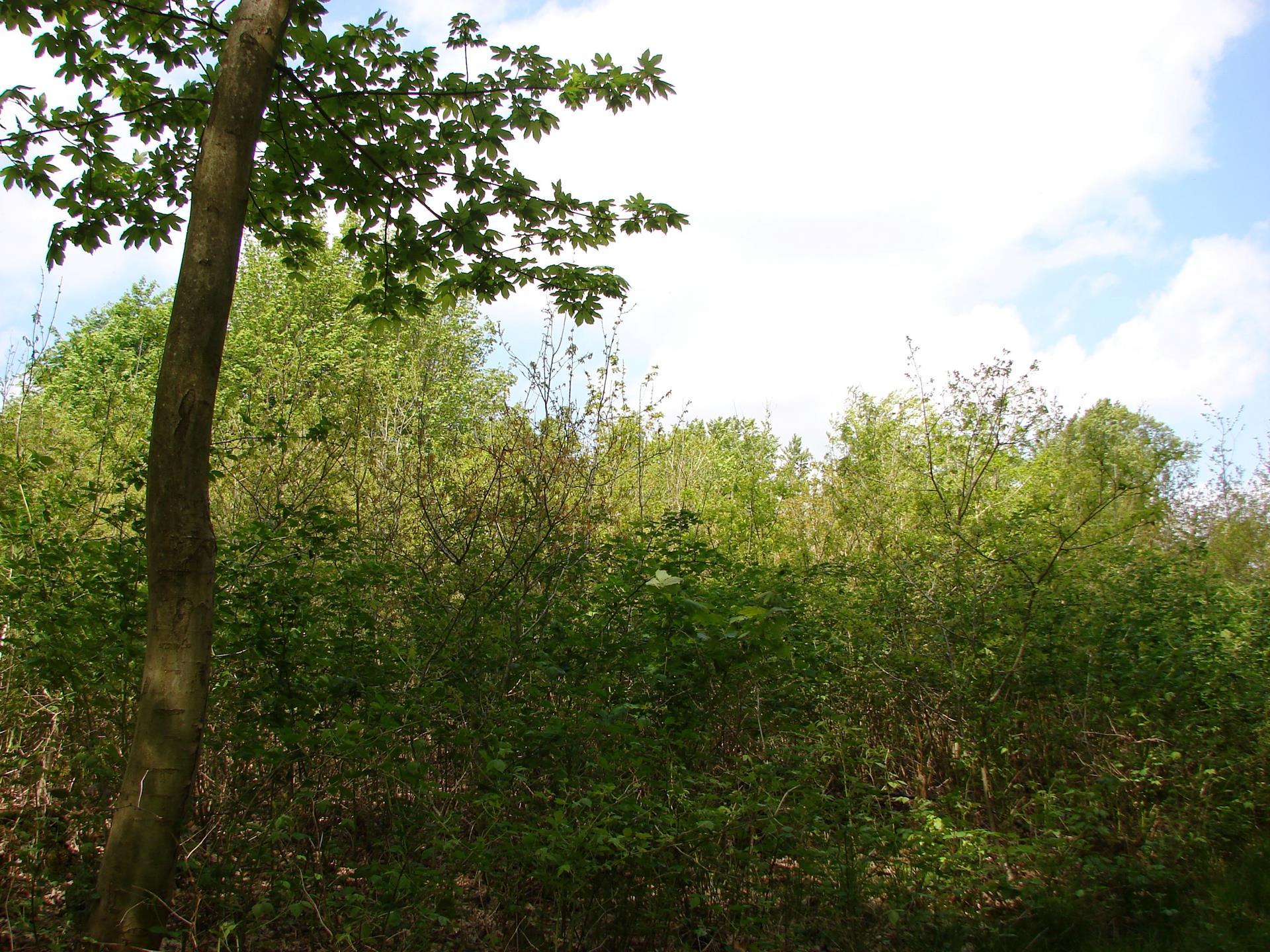 Planteavlsgård på Appevej i Tommerup - Andet